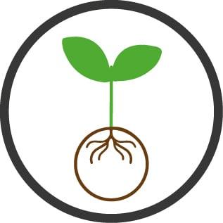 Contest Italian Ryegrass