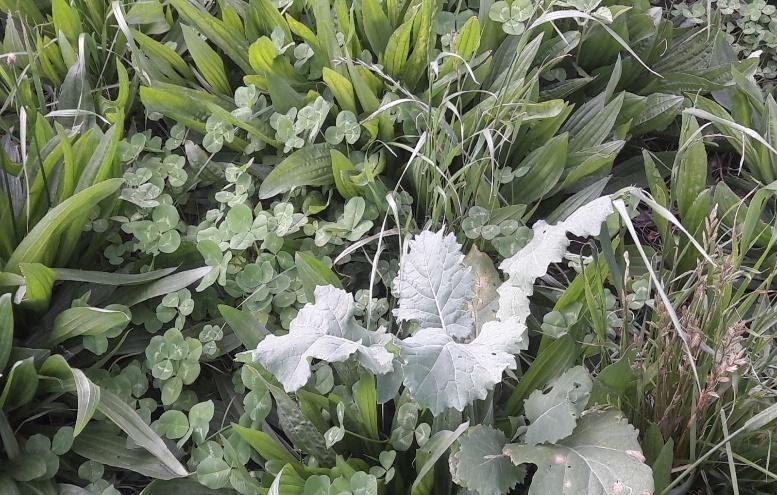 Summer Feed Crops